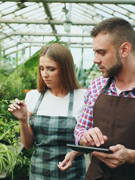 Attractive man and woman count flowers using tablet computer during working in the greenhouse